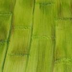 Parede com textura de bambu. (Foto:Divulgação)