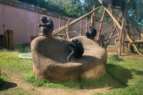 Zoológico de São Paulo 1