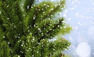 Comprar Arvore de Natal Decorada