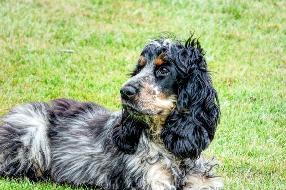 otite-canina-sintomas-e-como-tratar
