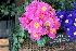 Decoração de jardins 2016: ideias e tendências