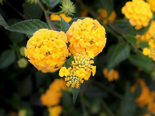 Plantas que Florescem o ano todo