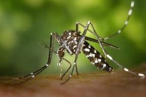 Como se proteger do vírus da Zika