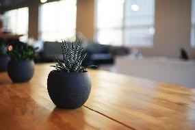 Plantas para decorar ambientes fechados