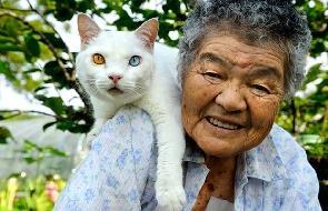 Gato siamês: cuidados, dicas para cuidar