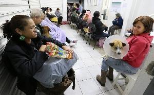 médico veterinário gratis