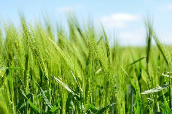 Na Graduação de Big Data no Agronegócio, o foco é a utilização da tecnologia na agricultura (Foto Ilustrativa)