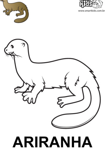 desenho para colorir animal ariranha
