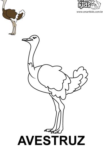 desenho para colorir animal avestruz