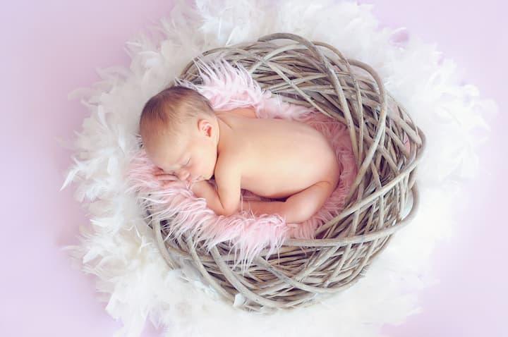 foto de rescem nascido no ninho