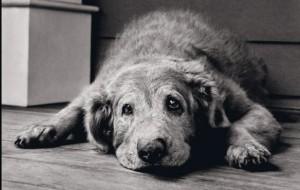 Cachorros: Quando Ficam Idosos?