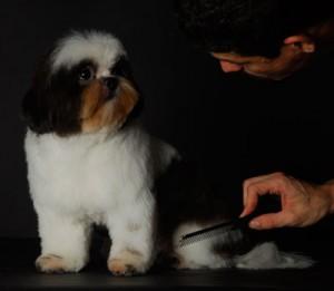 238846 Secador 3 300x261 Secador para Cachorro, Onde Comprar