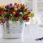 239955 sala flores balde prata 150x150 Flores para Decorar Sala