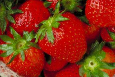 245549 Frutas Silvestres 4 Frutas Silvestres   Quais São