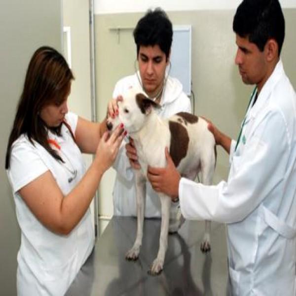 25874 cuidados cachorro prevenção 600x600 Calazar   Causas, Sintomas e Tratamento