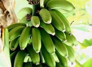 263274 banana G 060907 Conheça as frutas que ajudam a queimar as gordurinhas