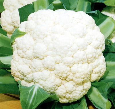 264151 couveflor benefícios Benefícios da couve flor para a saúde