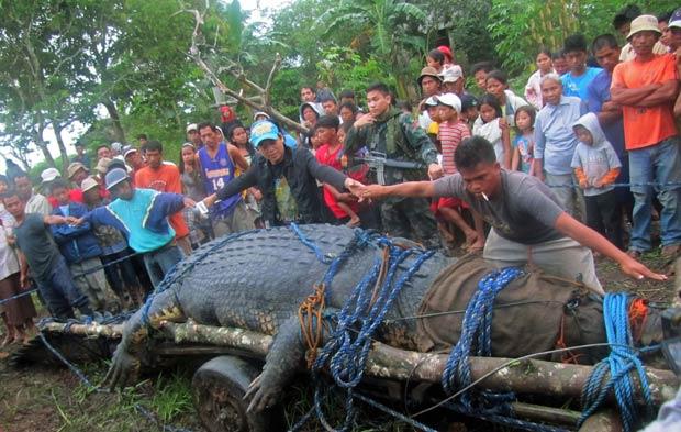 266588 2011 09 06t045739z 11744779 Jacaré Gigante de 6,4 Metros e 1 Tonelada é Capturado nas Filipinas
