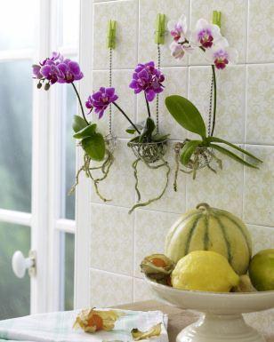 279981 orquideas na cozinha Decoração Da Casa Com Orquídeas