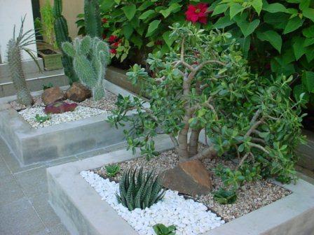 285021 pequenos jardins Modelos de jardim de inverno: fotos e dicas de como fazer