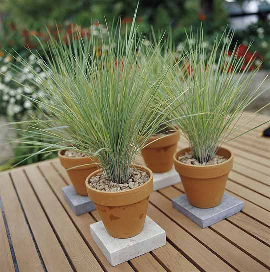 jardim ideias simples : jardim ideias simples:Creative Container Gardens