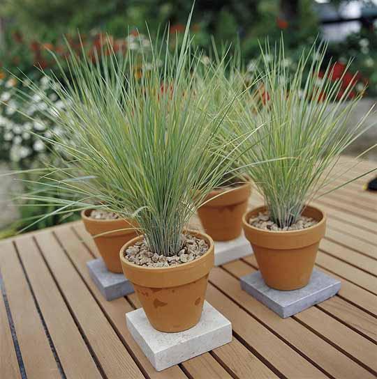 292472 Decoração para jardim simples 2 Ideias para decoração de jardim simples