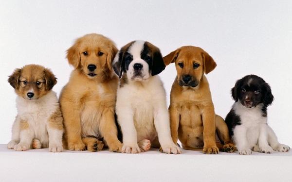 292855 como acabar com carrapatos em cachorros Exposição de cães nesse final de semana em São Paulo