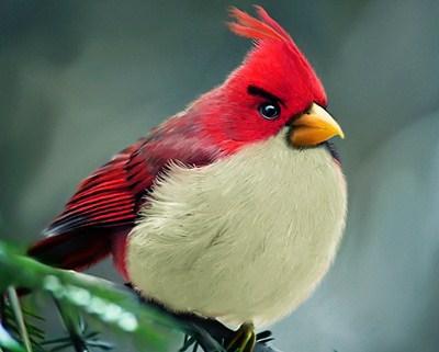 295109 AngryRealBirdspq Conheça os Angry Birds da vida real