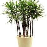 30084 plantas dentro de casa1 150x150 Plantas que Ajudam Acabar com a Poluição em Casa