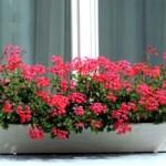 30084 plantas dentro de casa3 150x150 Plantas que Ajudam Acabar com a Poluição em Casa
