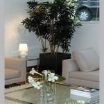 30084 plantas dentro de casa5 150x150 Plantas que Ajudam Acabar com a Poluição em Casa