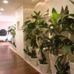 30084 plantas dentro de casa6 150x150 Plantas que Ajudam Acabar com a Poluição em Casa