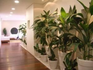 30084 plantas dentro de casa6 Plantas que Ajudam Acabar com a Poluição em Casa
