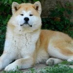 30616 Fotos de cachorro de raça 20 150x150 Fotos de cachorros de raça