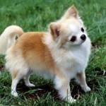 30616 Fotos de cachorro de raça 21 150x150 Fotos de cachorros de raça