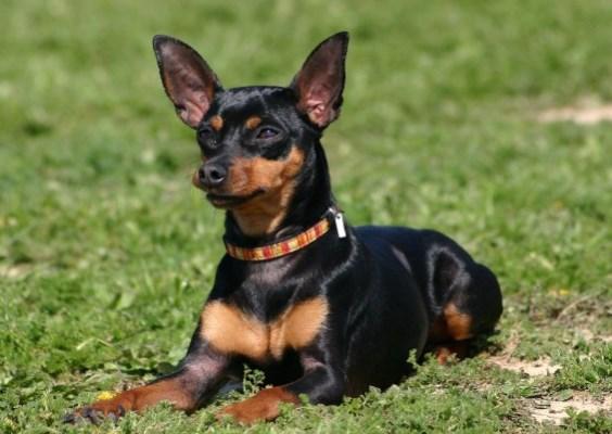 30616 Fotos de cachorro de raça 80 Fotos de cachorros de raça