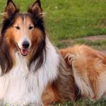 30616 Fotos de cachorro de raça 81 150x150 Fotos de cachorros de raça