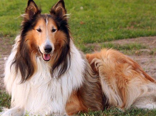 30616 Fotos de cachorro de raça 81 Fotos de cachorros de raça