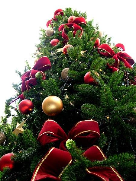 315355 Saiba como surgiu a árvore de natal 2 Saiba como surgiu a árvore de natal