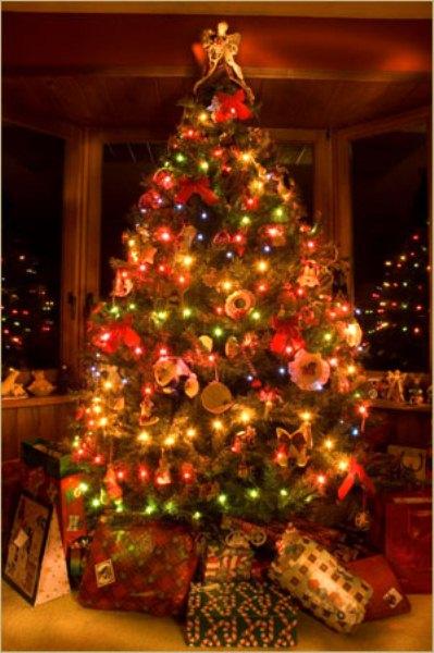 315355 Saiba como surgiu a árvore de natal 3 Saiba como surgiu a árvore de natal