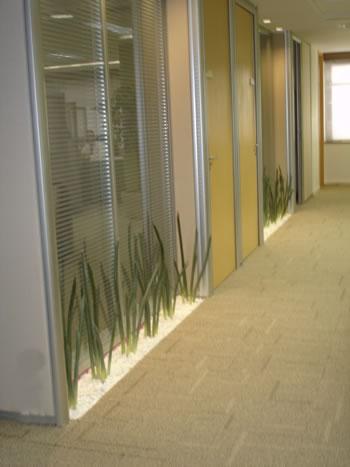 329187 são Saiba como usar as plantas para decorar a casa