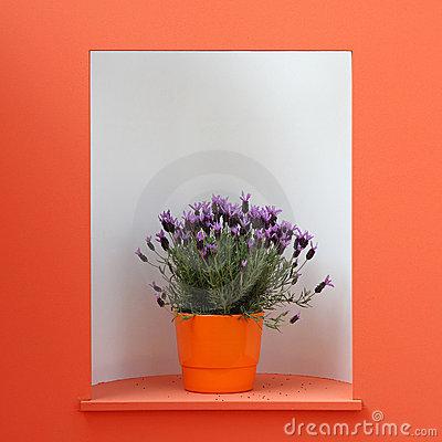 329187 viol Saiba como usar as plantas para decorar a casa