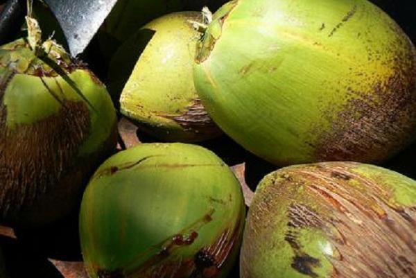 333327 Agua de coco verde Conheça as diversas formas de incluir as frutas na alimentação