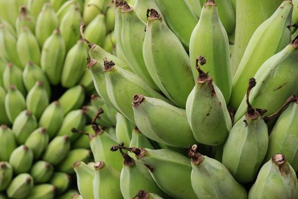 333327 banana verde Conheça as diversas formas de incluir as frutas na alimentação