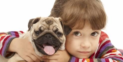 334327 36 g Descubra qual raça de cachorro combina com você