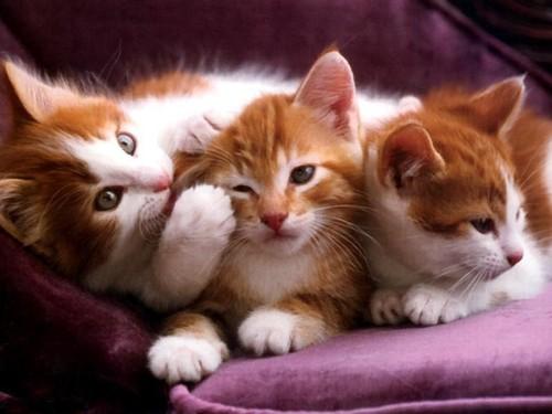 Veja 7 curiosidades sobre a vida dos gatos