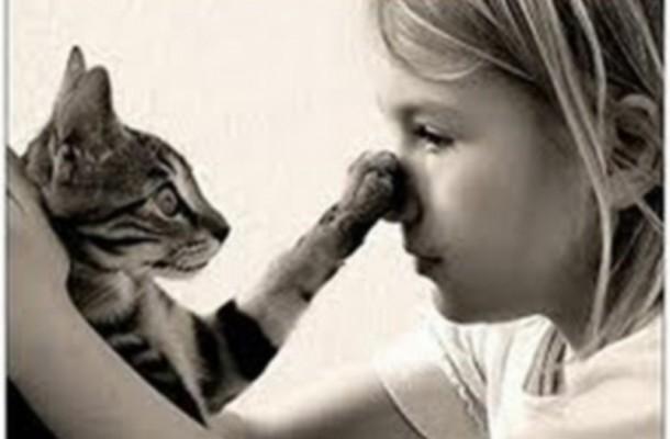 334392 tenta 610x400 Veja 7 curiosidades sobre a vida dos gatos