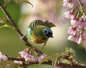 339140 OS PASSAROS E O JARDIM Descubra como atrair pássaros para o seu jardim