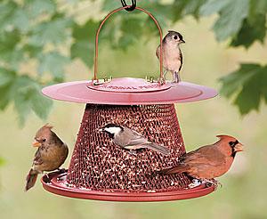339140 comedouro grade Descubra como atrair pássaros para o seu jardim