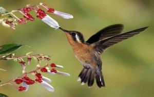 Descubra como atrair pássaros para o seu jardim